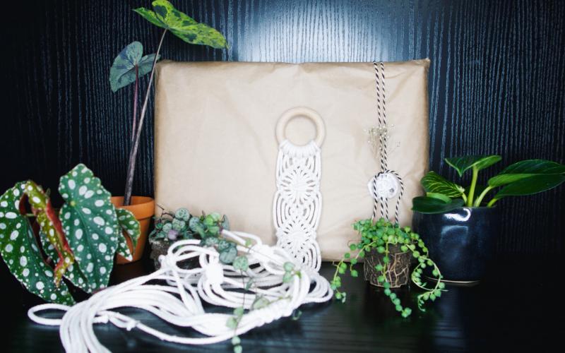 Jungle Box Abonnement